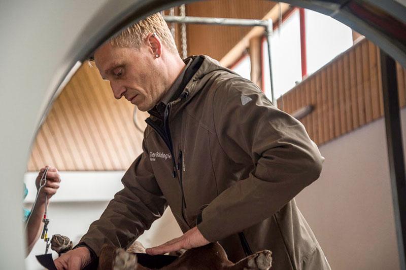 Jens Hanke am Computertomografen beim Fixieren eines Hundes