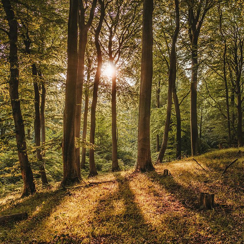 Laubwald mit durchscheinender Sonne durch Baumkrone.
